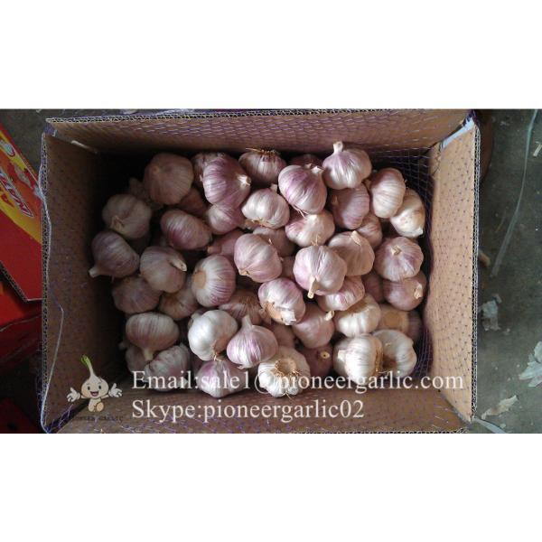 Chinese Fresh Red (Allium Sativum) Garlic Loose Packing #4 image