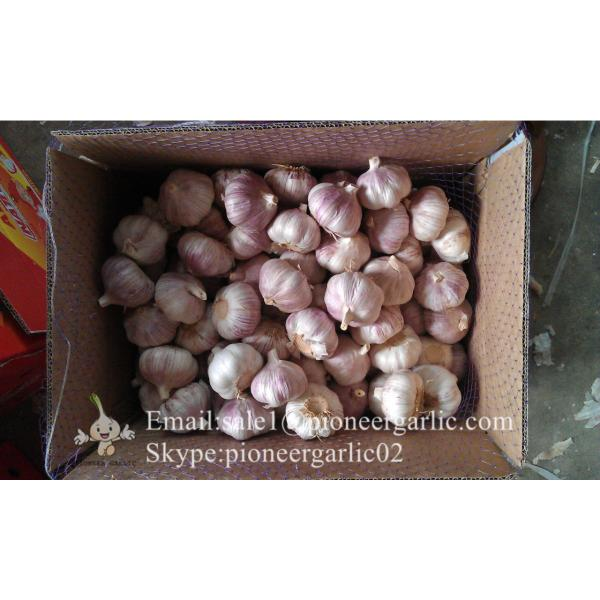 Wholesale Chinese Garlic Normal White 5.0cm Natural Garlic Packed in Carton Box #4 image