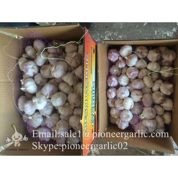 Best seller Normal White Garlic 5.0cm-5.5cm Packed in Mesh Bag or Carton Box #1 image