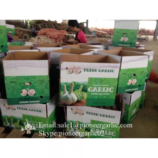 5-5.5cm Chinese Fresh Normal White Garlic In 5kg Carton Box Packing #4 image