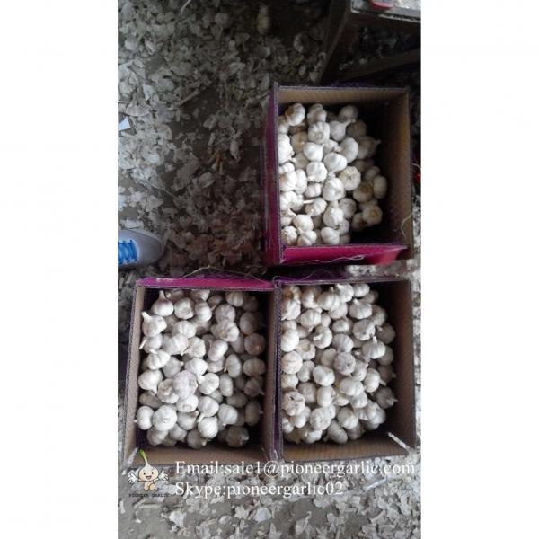 5-5.5cm Chinese Fresh Normal White Garlic In 5kg Carton Box Packing #3 image