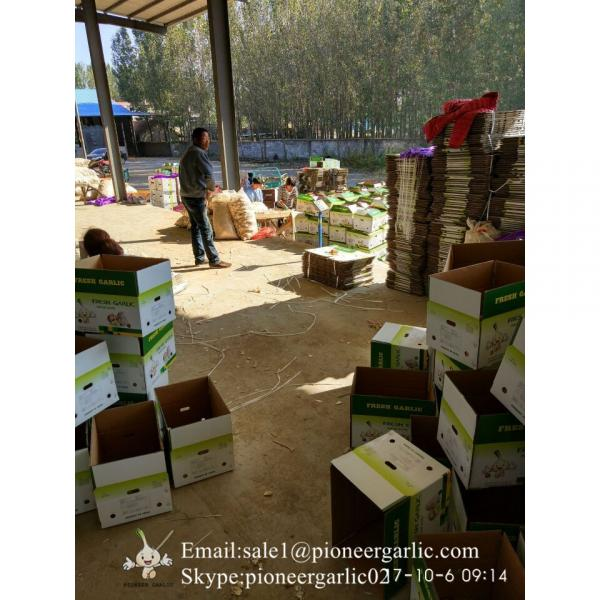 New Crop 6cm and up Purple Fresh Garlic In 10 kg Box packing #4 image