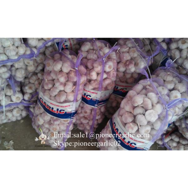 Nature Made 5.5-6.0cm Wholesale Chinese Normal Garlic Material of Black Garlic in Mesh Bag #2 image