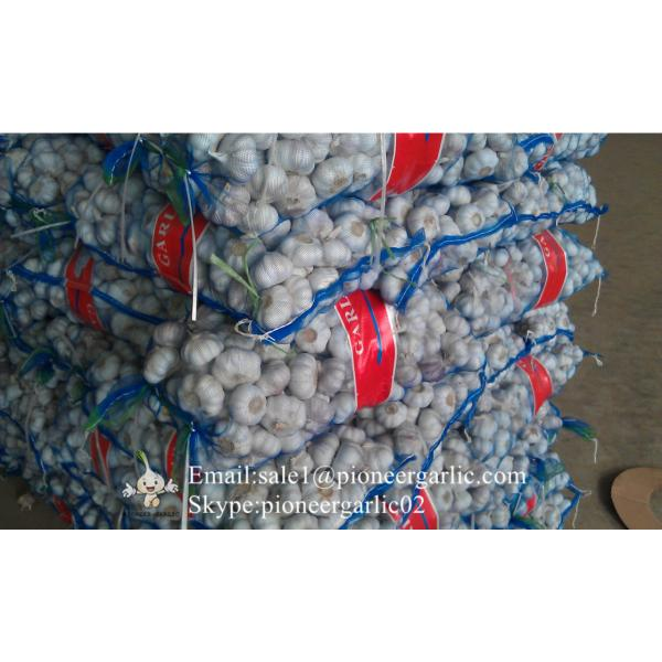 New Crop Fresh Jinxiang Normal White Garlic 5cm And Up In Mesh Bag Packing #5 image
