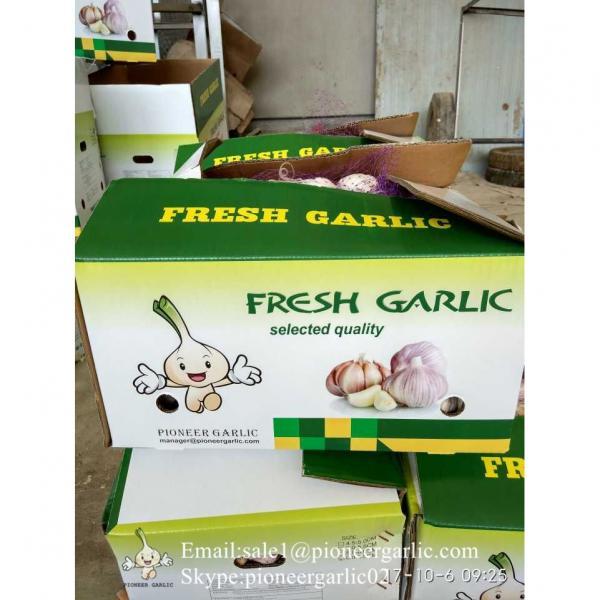 5-5.5cm Chinese Fresh Normal White Garlic In 5kg Carton Box Packing #2 image