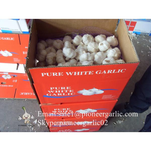Best seller Normal White Garlic 5.0cm-5.5cm Packed in Mesh Bag or Carton Box #3 image