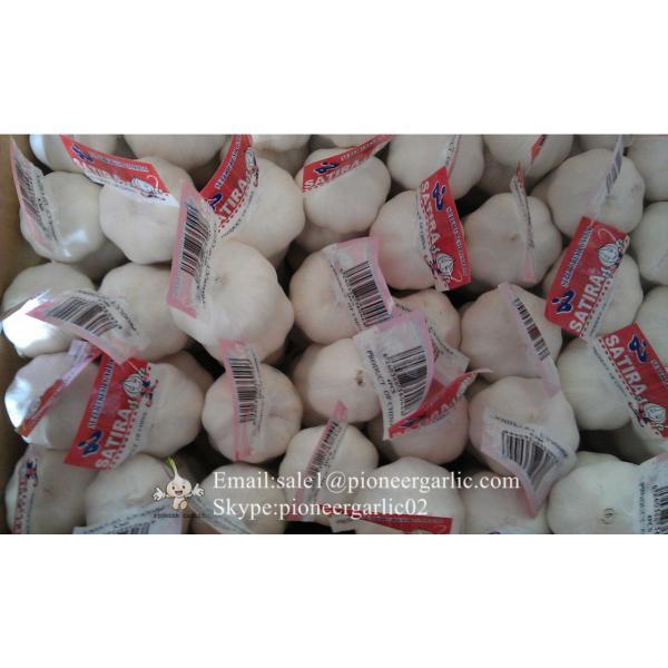 Garlic Exporter in Jinxiang Normal White Garlic Purple Garlic #2 image