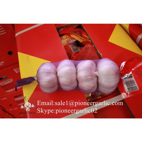 Jinxiang Fresh 5.5-6.0cm Chinese Purple Garlic for Garlic Wholesale Buyers around the world #2 image