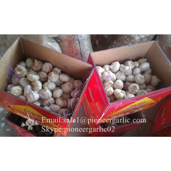 New Crop 6cm and up Purple Fresh Garlic In 10 kg Box packing #3 image