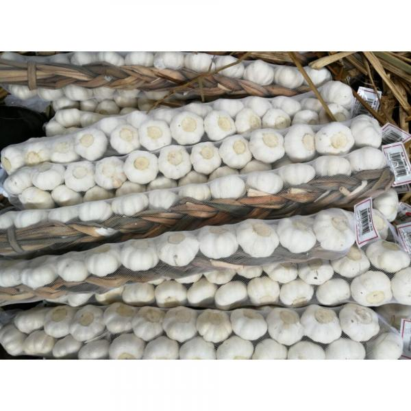 100% Pure White Garlic European Quality Standard Exported to Costa Rica #4 image