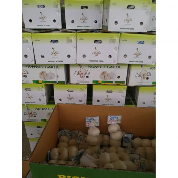 New Crop Chinese 5cm Snow White Fresh Garlic Small Packing In Box #2 image