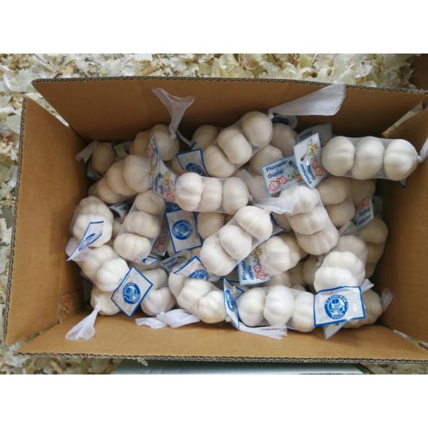 Chinese 100% Pure White Garlic Exported to Costa Rica Guatemala #3 image