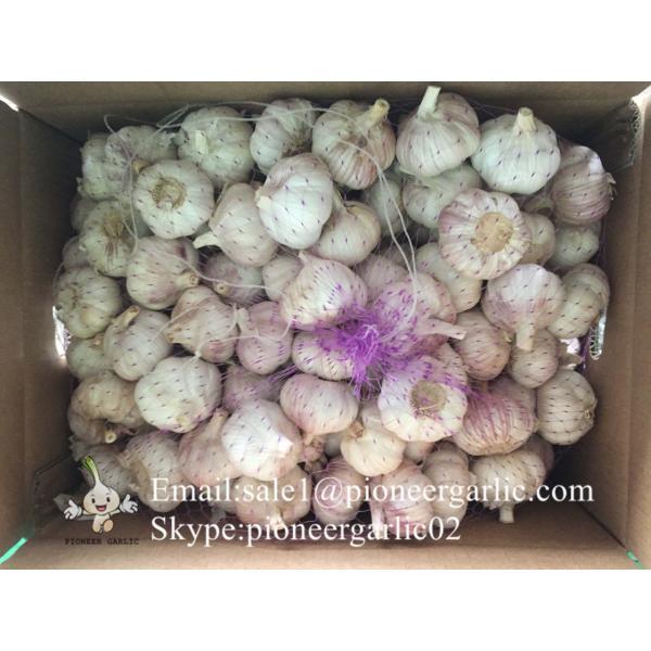 Chinese Fresh Red (Allium Sativum) Garlic Loose Packing #2 image