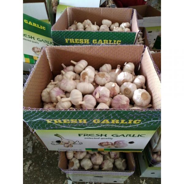 CHINA GARLIC ARE EXPORTED TO BRAASIL MARKET (GOODFARMER) #1 image