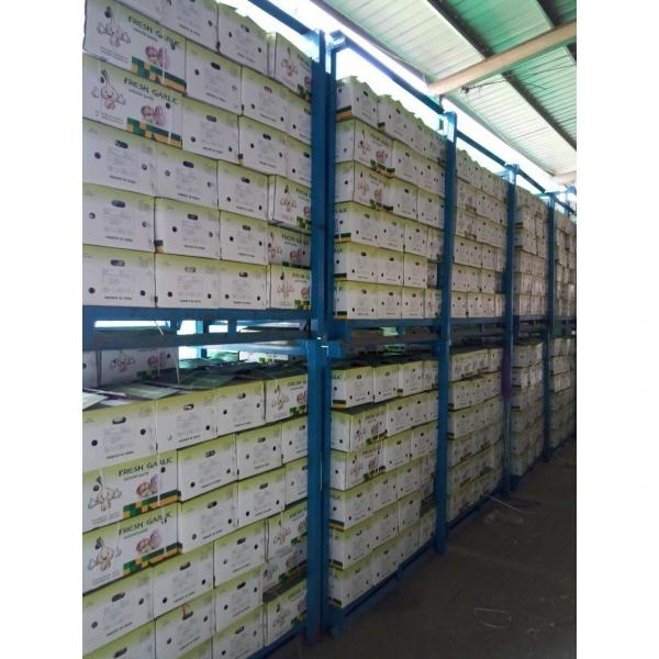 CHINA GARLIC ARE EXPORTED TO BRAASIL MARKET (GOODFARMER) #3 image