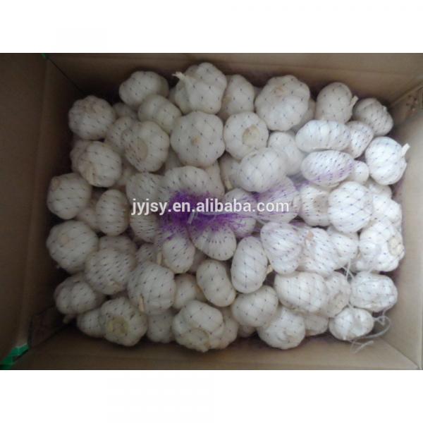fresh garlic of 2017 from china #5 image