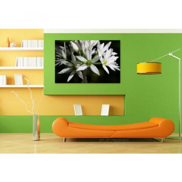 Stunning Poster Wall Art Decor Bear S Garlic Allium Ursinum 36x24 Inches #4 image