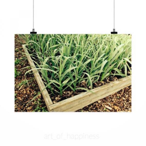 Stunning Poster Wall Art Decor Garlic Garden Gardening Plant Box 36x24 Inches #2 image