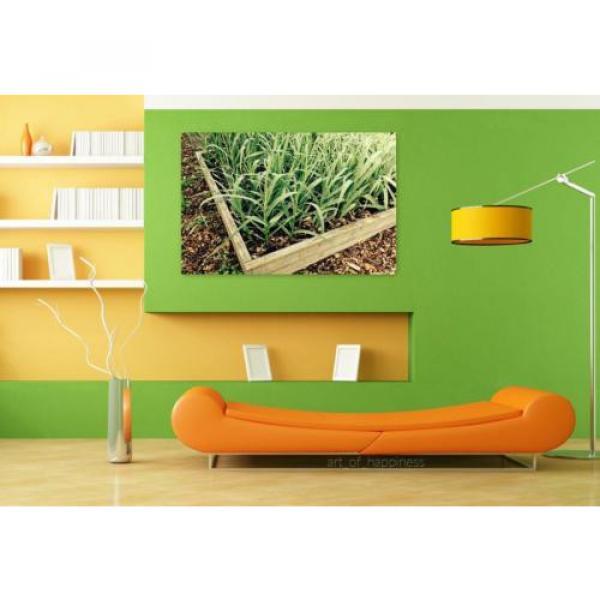 Stunning Poster Wall Art Decor Garlic Garden Gardening Plant Box 36x24 Inches #4 image